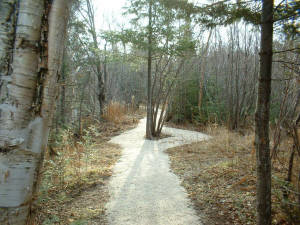 Part of the developed Walking Trail.